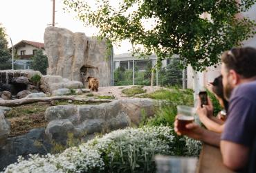 Bear at Utah's Hogle Zoo Brew