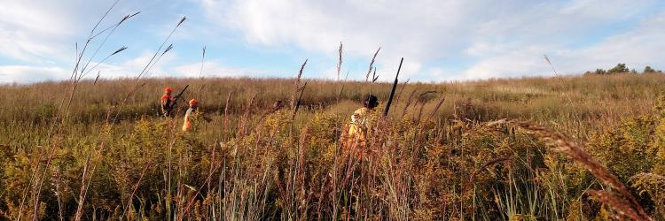 Hunting pheasants at Pine Hill Kennel & Sportsman's Club