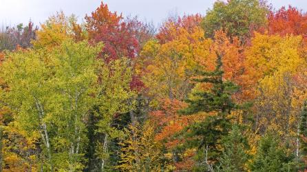 Trees in Autumn in Adirondacks