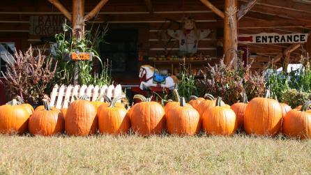 Bankers Orchard Pumpkins 2_Jody Parks - Photo by Adirondack Coast Visitors Bureau