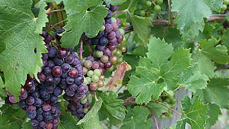 Canandaigua Wine Trail Scenic