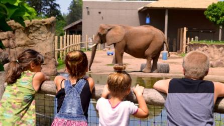 Zoos and Animals