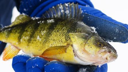 Seasons Winter - Fishing