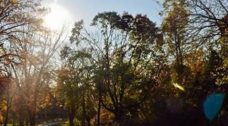 Fall Foliage - Fort Washington - Side Panel