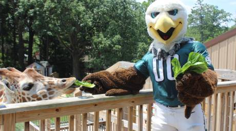 Swoop at Elmwood Park Zoo