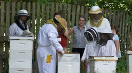 Beekeeping and Honey Festival