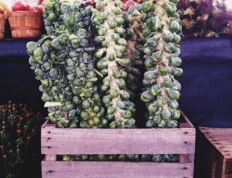 Downtown Market Brussel Sprouts