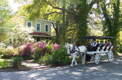Springbrook Farms Horse Carriage Rides