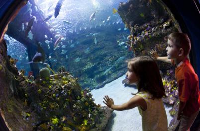 Shark tank at the NC Aquarium at Fort Fisher