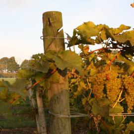 Greenvale Vineyards