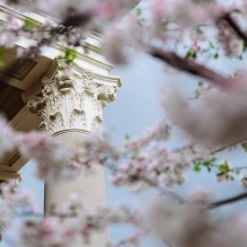 Columns in Spring
