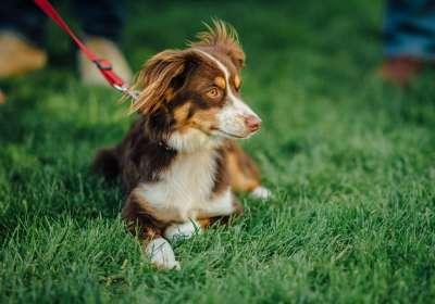 Napa Valley Winery Dog