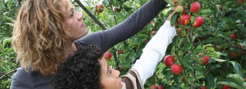 Northwest Indiana Orchards and U-Picks