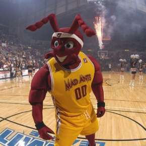 Mad Ants Basketball