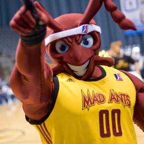 The Mad Ant