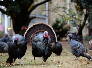 Albany Restaurants Offering Thanksgiving Dinner and Dessert