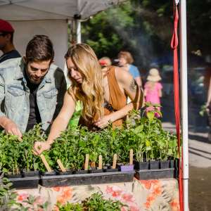Make It, Bake It, Grow It: A Guide to the Downtown Farmers Market