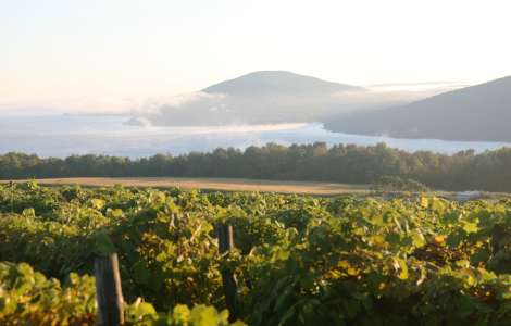 Finger Lakes Grapevines on Canandaigua Lake