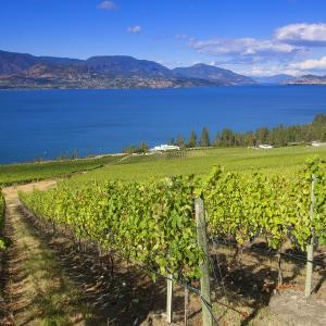 CedarCreek Vineyard on the Lakeshore Wine Route