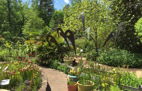 North Carolina Botanical Garden Plants