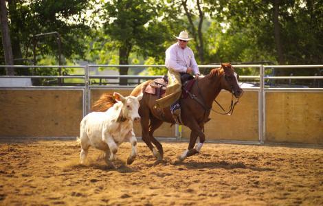 Rockford, Illinois Cowboy