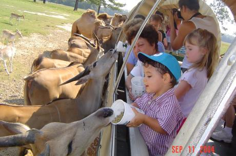 Kids feeding animals at Global Wildlife Center