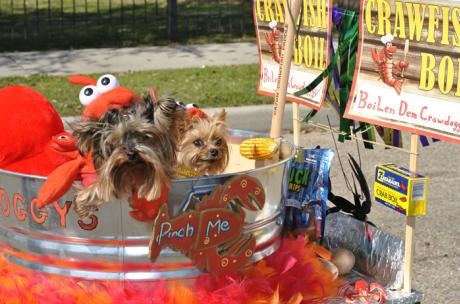 Mardi Gras - Dogs family walking parade of pooches