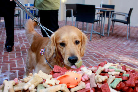 Pet Friendly Hotels No Need To Leave Sparky At Home Alexandrians Love Their Pets