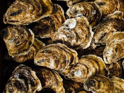 Gulf Seafood - Caminada Bay - Oysters