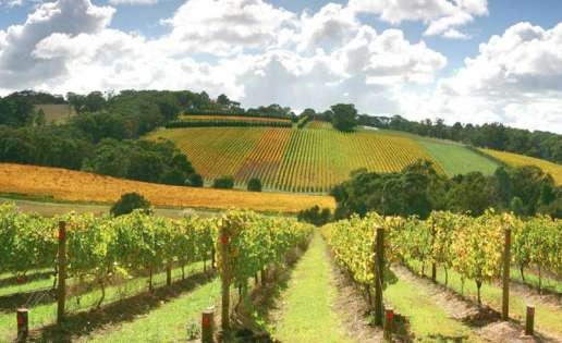 Regional Victoria wine country