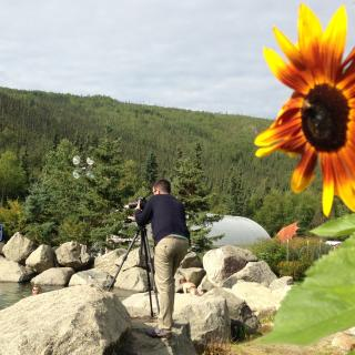 Flower and photographer at Chena Hot Springs Resort