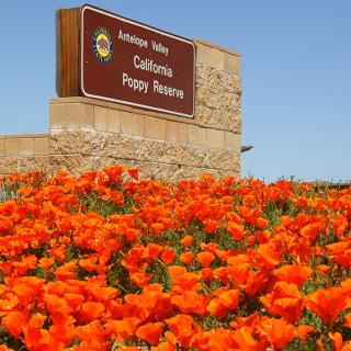 Poppy Reserve Sign