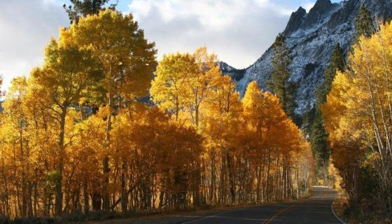 Fall Colors In Mono County