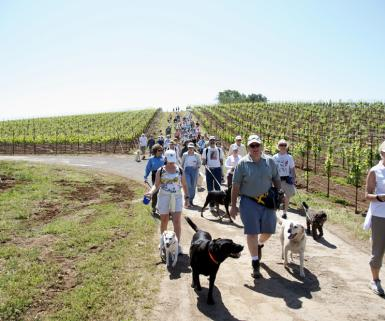 Kunde Winery Dog Hike