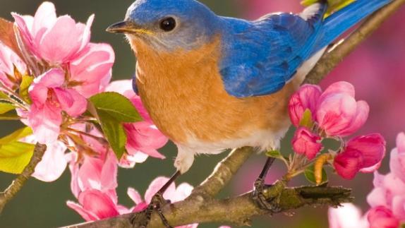 birding in NY