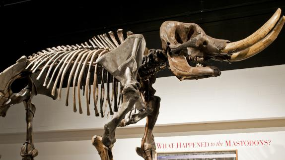 NYS Museum Mastadon - History Event Highlight