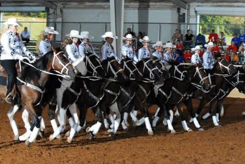 Equestrian Drill Team