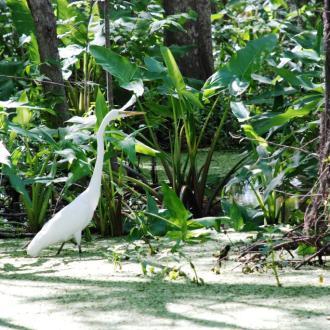 Pearl River National Wildlife Refuge
