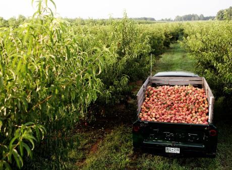 Peach Truck Tour Van Atta's