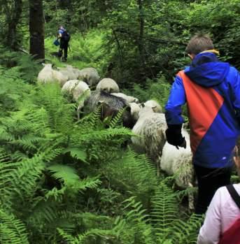 Hardanger Hiking