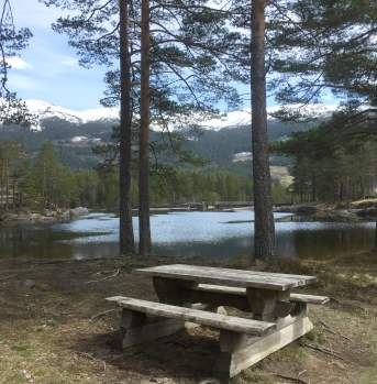Picnic area along the road