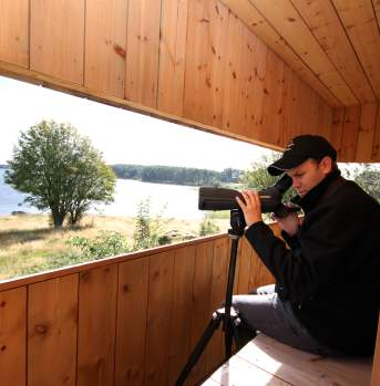 Bird Watching Farsund Norway