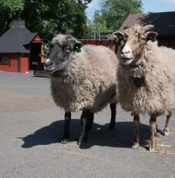 Sheepwithaview, Oslo