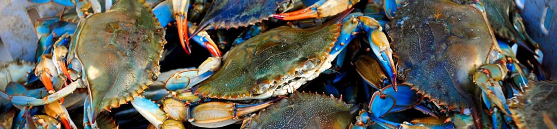 outdoor-recreation/creole-nature-trails/crabbing Crab