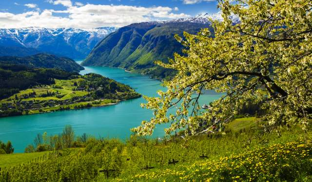 View of Hardanger in spring time