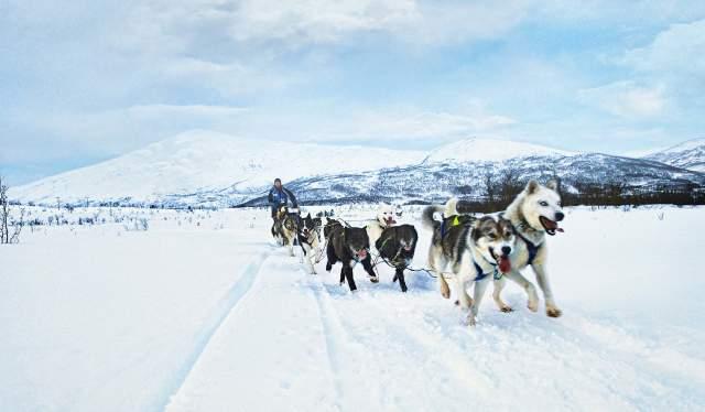 Traîneau à chiens en Norvège
