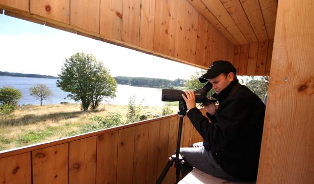 Bird Watching Farsund Norway