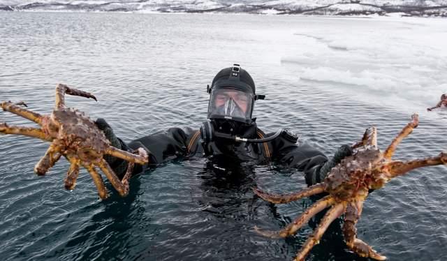 Diver holding king crab, Kirkenes