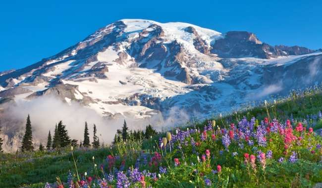 Paradise Wildflowers at Mount Rainier