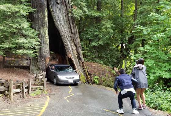 Shrine drive-thru tree